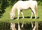 Grazing Reflection