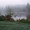 Frosty, foggy, flowery